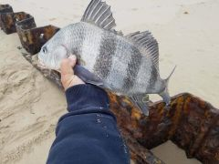 Oceans East Bait & Tackle Nags Head photo