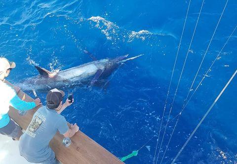 The Hooker, Hooker Sportfishing Charters