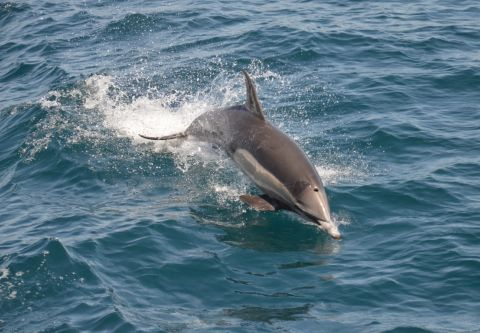 Causeway Watersports, Nags Head Outer Banks, Dolphin Tours