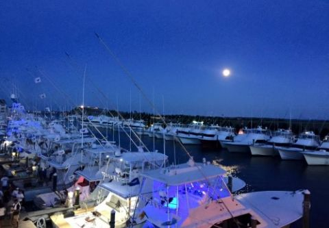 Pirate's Cove Marina, Fuel & Launch Your Boat